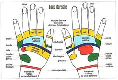 Nos mains et pieds sont connectés avec le reste de notre corps par une série de nerfs. Chaque organe ou partie du corps correspond à une zone ou à un point sur les mains, les pieds ou les oreilles. La connaissance de ces différents points permet de localiser et dissiper les tensions afin de rétablir … Health And Beauty Tips, Health And Wellness, Health Fitness, Acupuncture, Tai Chi, Hand Reflexology, Tooth Pain, Acupressure Points, 7 Chakras