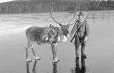 A Finnish soldier with a reindeer during the Winter War