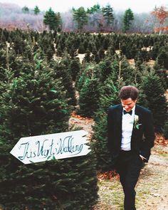Christmas Tree Farm wedding