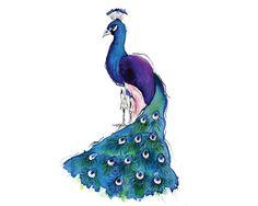 Peacock - 8x10 inch print of original artwork