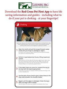 April is Pet First Aid Awareness Month. Be emergency prepared at home by downloading the Red Cross Pet First Aid app on your phone.