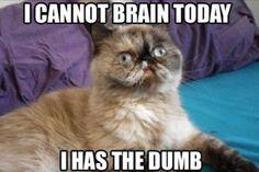 How I feel most Mondays