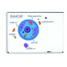 MAGNETIC ANIMAL CELLS
