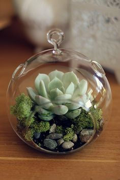 Love this miniature rock garden with succulants in a small glass ornament that can be suspended ~ Epi