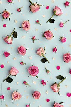 Rose background on blue by Ruth Black - Flower, Rose - Stocksy United Rose Wallpaper Tumblr, Flor Iphone Wallpaper, Wallpaper Nature Flowers, Tumblr Backgrounds, Flower Backgrounds, Wallpaper Backgrounds, Desktop Wallpapers, Black Backgrounds, Vintage Floral Backgrounds