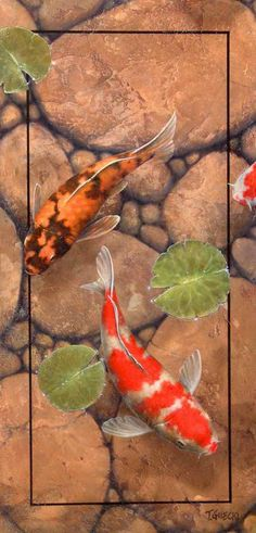 Koi Out of the Rectangle