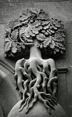 indigodreams:  Oak Architectural Detail  by andyconniecox  on Flickr