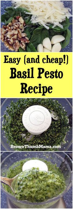 An easy recipe for basil pesto with a secret ingredient that cuts the cost in half! Includes bonus recipes and freezing tips too.
