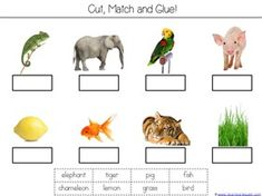 a color of his own kindergarten literature unit printables - A Color Of His Own Book