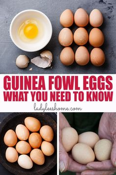 Guinea fowl eggs are healthy, tasty, rich, creamy, and can be used just like chicken eggs. In this post you'll find all the information you need about guinea fowl eggs. Chicken Eggs, Chicken Feed, Diy Chicken Coop, Raising Farm Animals, Raising Chickens, Egg Recipes, Real Food Recipes, Guinea Fowl, Wild Edibles