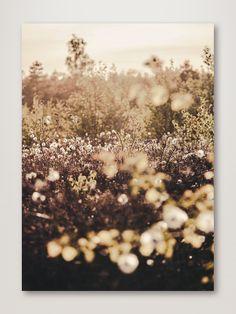 Golden Field - 50x70cm / Black