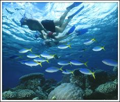 Best snorkeling ever, the crystal clear waters of Molokini Crater   ..... Maui