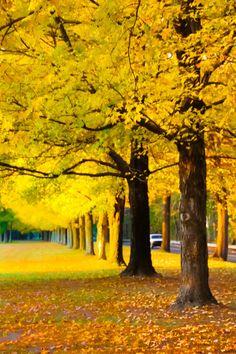 O Amarelo me encanta!!!