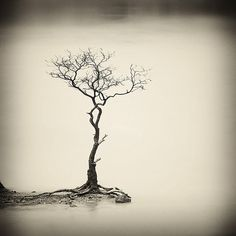 tree. this would make a nice tattoo
