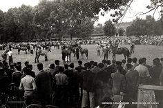 Concurso de ganado en Fadura, 1950 (Colección Archivo municipal) (ref. 00601)