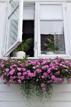 Window detail , in old Stavanger Window Detail, Stavanger, Container Gardening, Norway, Stairs, Windows, Doors, Hallways, Plants