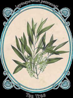 Ungüento Balsámico de Romero y Tea Tree - Boti-K Puro Tea Tree, Palm Oil, Jojoba Oil, Shea Butter, Natural Soaps, Fur