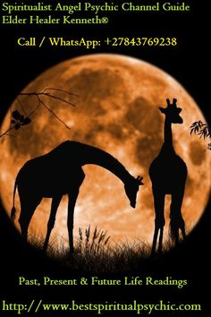 Giraffe silhouettes against a full moon Beautiful Creatures, Animals Beautiful, Animals And Pets, Cute Animals, Wild Animals, Baby Animals, Beautiful Moon, Beautiful Gifts, Tier Fotos