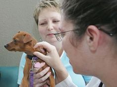 Texas A Researcher Sees Value In Clinical Cancer Trials For Pets: http://bionews-tx.com/news/2013/06/17/pets-battling-cancer-can-join-clinical-trials-too/