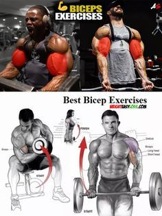 Biceps Exercises Biceps Exercises – Fitness&Health&Gym For Women Dumbbell Back Workout, Forearm Workout, Dumbbell Workout, Shoulder And Arm Workout, Dumbbell Shoulder Press, Biceps And Triceps, Shoulder Muscles, Gym Workout Tips, Fitness Plan