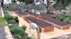 Beautiful and functional veggie garden - Raised bed gardens - Mt. Barker, Adelaide South Australia