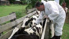 #El Senasa habilitó una inversión de U$S 38 millones para producir vacunas anti aftosa - La Voz del Interior: La Voz del Interior El Senasa…