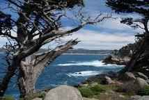 point lobos downtown - Google Search