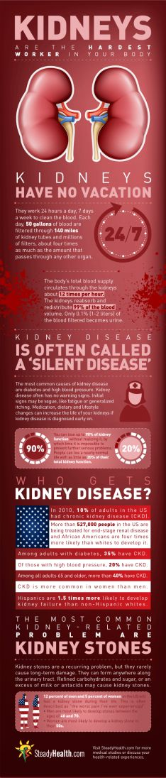 Kidneys – Hardest Workers in the Body