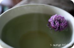 One ofour favorite teas fromour yard is red clover tea. Not only are the blossoms tasty to munch but they make a wonderful cleansing tea. We are studying the many benefits of clover to our gardens (nitrogen) and our bodies. This is also a fun activity to doif you are studying nitrogen on the PTOE. …