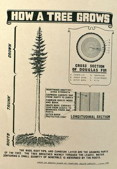"waynedenman: "" How a tree grows by Wayne Denman """
