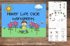 Flower Life Cycle Worksheets - 41 pages of diagrams, puzzles, notebooking pages and more!