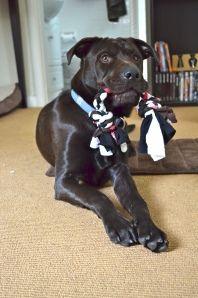 Simple DIY Dog Rope
