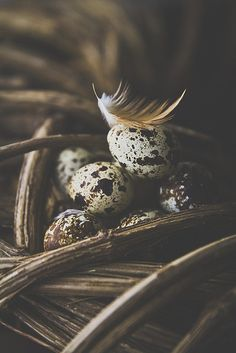 Quail eggs | Flickr - Photo Sharing!