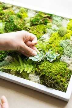 How to Make a Carefree Moss Garden - Dalla VitaYou can find Moss garden and more on our website.How to Make a Carefree Moss Garden - Dalla Vita Moss Wall Art, Moss Art, Garden Plants, Indoor Plants, Air Plants, Garden Walls, Garden Wall Art, Indoor Gardening, Cactus Plants