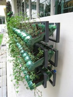 Vertical garden made with CD racks from IKEA and bottles cut into gardening pots.
