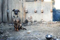 Ajude cães abandonados nas ruas