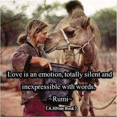 Rumi ღ♬