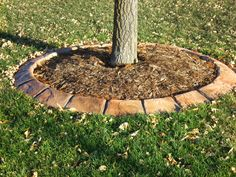 Stamped Concrete Edging used for tree islands.  Maintains its shape and lasts!  Perfect for mowing, helps the tree retain needed moisture and looks amazing.