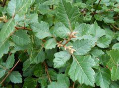 Fragrant Sumac Trees And Shrubs, Plant Leaves, Plants, Flora, Plant, Planting