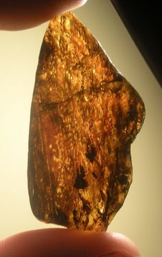 Gorgeous polished amber from Chiapas Mexico. This piece is not for sale, it is now a part of my stepson's collection. Meteorite For Sale, Minerals And Gemstones, Baltic Amber, Exotic, Collection, Beautiful