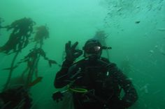 Langebaan Divers offers Boat Charters in Langebaan, West Coast. If you thought fishing above the water's surface was exciting, then you will be ecstatic when you try our Spearfishing and Boat Charters. #dirtyboots #langebaan #boatcharters