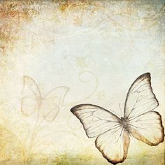 fondo vintage mariposa - Buscar con Google