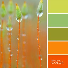 We love these bright color schemes! Modern interior colors, orange color schemes Light green and orange color scheme. Foto Macro, Macro Photo, Orange Color Schemes, Orange Palette, Color Combos, Fotografia Macro, Dew Drops, Jolie Photo, Green And Orange