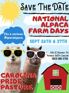 Save the date and join us for a fun, family-friendly weekend!  Shop alpaca products and take a selfie with the herd! Carolina Pride, South Carolina, Farm Day, Suri Alpaca, Great Pyrenees, Alpacas, Join, Selfie, Shop