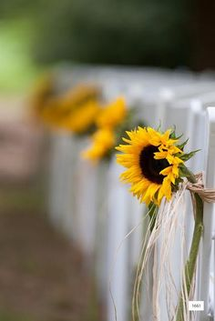 single stem of sunflower create a beautiful line of pew markers for this outdoor country wedding