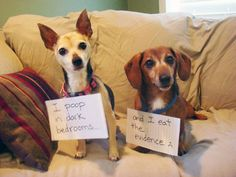 Think your pup has been naughty? Think again. So what is dog shaming, you ask? It's when a dog behaves badly (which based on these pics… Cute Baby Animals, Funny Animals, I Love Dogs, Cute Dogs, Dog Shaming Photos, Cute Animal Videos, Funny Dog Pictures, Dog Quotes, Funny Dogs