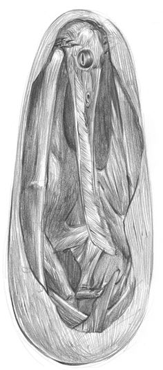 Pterosaur embryo in its egg by Dewlap