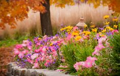 Minnesota Landscape Arboretum named best botanical garden by USA Today Readers Choice White Oak Tree, Minnesota Landscaping, Kids Growing Up, University Of Minnesota, Hardy Plants, Exotic Plants, Tile Patterns, Cottage Style, Geometric Shapes