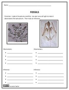 Fossil Observation and Inference