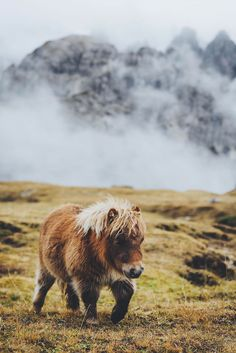 "souhailbog: "" Horses as Big as Dogs By Hannes Becker 